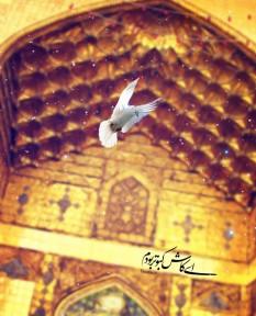 ای کاش کبوتر بودم